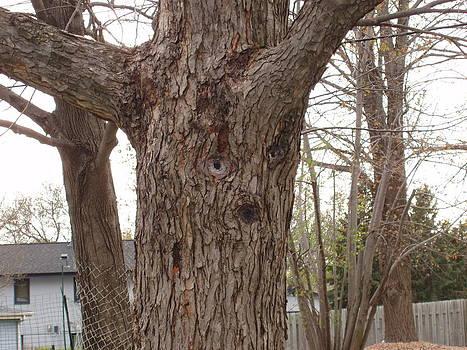Tree Face by Lori  Theim-Busch