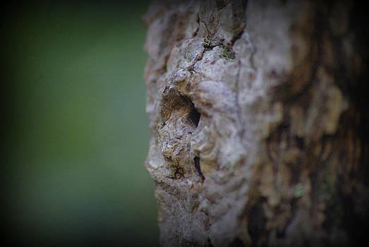 Marilyn Wilson - Tree Face