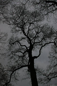 Tree by Ian Flear