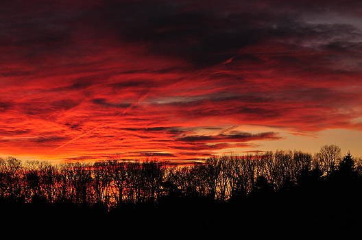 Tree line Sunset 2 by Peter  McIntosh