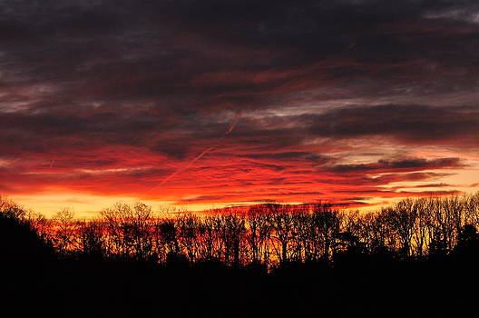 Tree line Sunset 3 by Peter  McIntosh