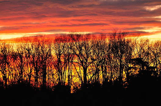 Tree line Sunset 4 by Peter  McIntosh