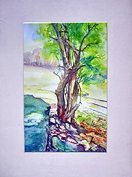 Tree near Rock by Prabhu  Dhok