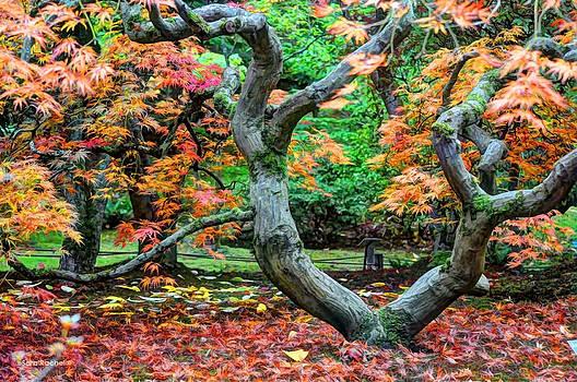 Tree of Life by Sarai Rachel