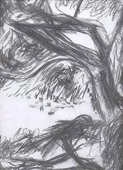Tree Tops in the Wind by Rebecca Bourke