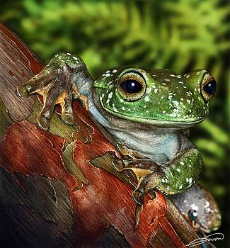 Treefrog  by Owen Bell