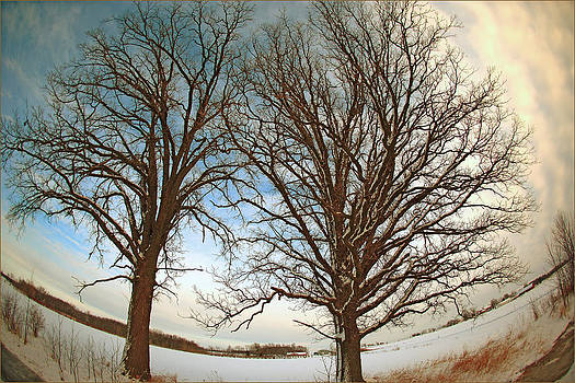 Trees Against the Winter Sky by Fuad Azmat