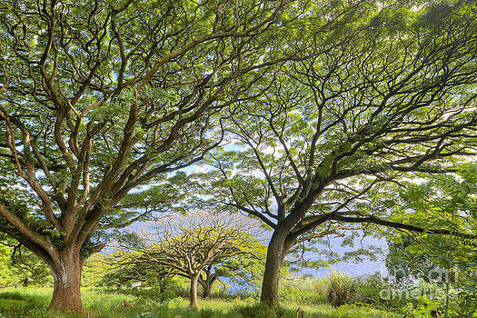 Trees in Hana Maui Hawaii by Dustin K Ryan