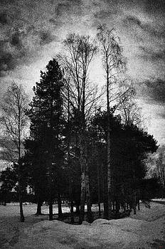 Trees in winter by SM Shahrokni