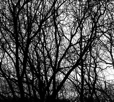 Trees by  Tricia Mccoo