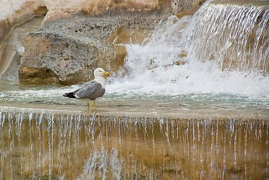 Trevi Bird by Jen Morrison