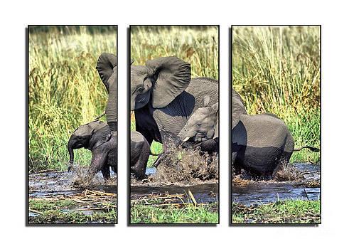 Triptych wildlife by Sergey Korotkov