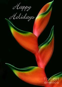 Sabrina L Ryan - Tropical Holiday Card