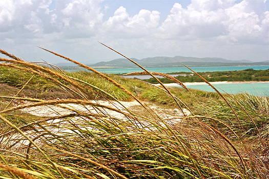 Tropical Landscape by Felix Zapata
