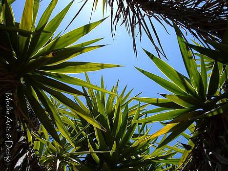 Tropics by Jessica Jimerson