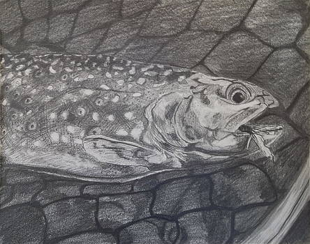 Trout In Net by Michelle Grove
