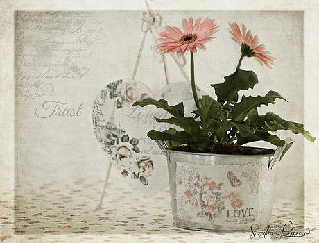 Trust  by Sandra Rossouw