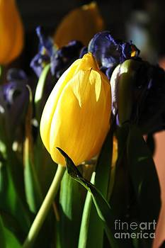 Tulip and Irises by Theresa Willingham