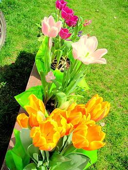 Tulip Assortment by Amy Bradley