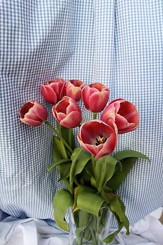 Lynnette Johns - Tulip Picnic