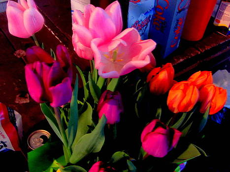 Tulips by Amy Bradley