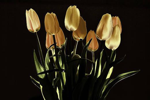 Tulips at night light by Valerii Tkachenko