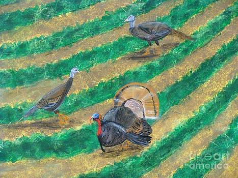 Turkeys in Field by Erin Mikels