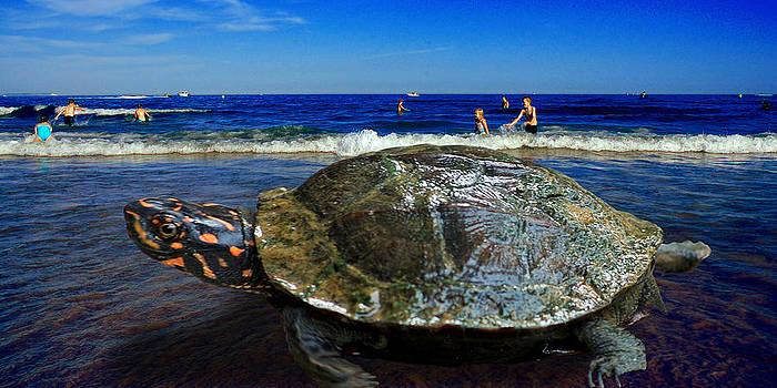 Turtle on the Beach by Sivakolunthu Loganathan