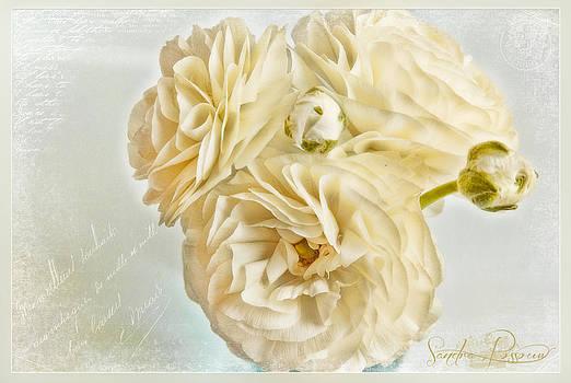 Tutus and Petticoats by Sandra Rossouw