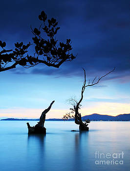 Twilight And Dead Tree In The Sea  by Anusorn Phuengprasert nachol