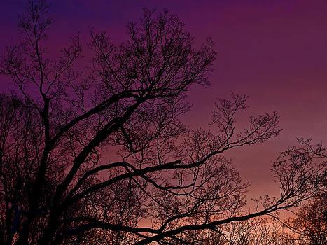 LeeAnn McLaneGoetz McLaneGoetzStudioLLCcom - Twilight Dreams