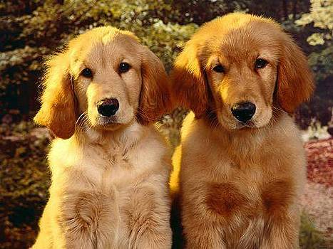 Twins Dog by Sunkies Fang