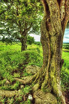 Twisted View by Kim Shatwell-Irishphotographer