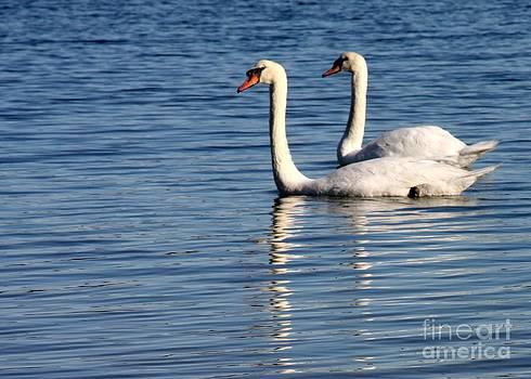 Sabrina L Ryan - Two Beautiful Swans