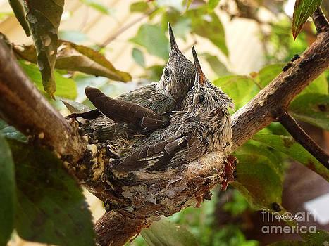 Xueling Zou - Two Hummingbird Babies in a Nest 4