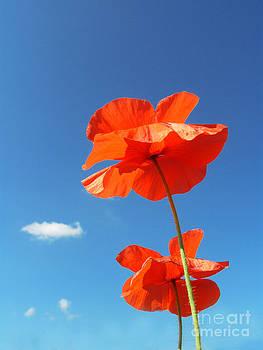 Two Poppies by Karin Ubeleis-Jones