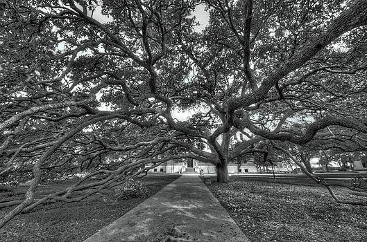 David Morefield - Under the Century Tree - Black and White