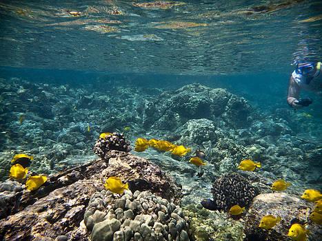 Under the Sea by Jen Morrison