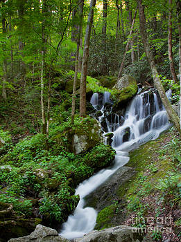 Unnamed Falls at Tremont NC by E Mac MacKay