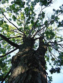 Up a Tree by Jesslyn Fraser
