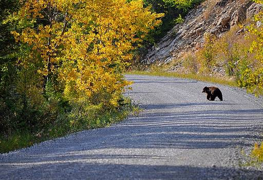 Little Black Bear by Diana Nigon