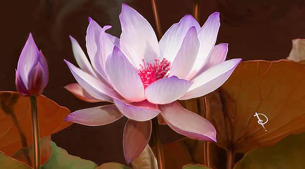 Various Lotus by Dheeraj Verma