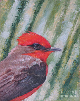 Vermillion Flycatcher by Judith Zur