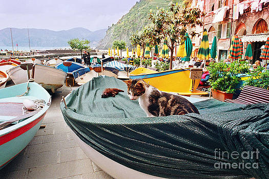 Vernazza Boat Kitty by Virginia Furness