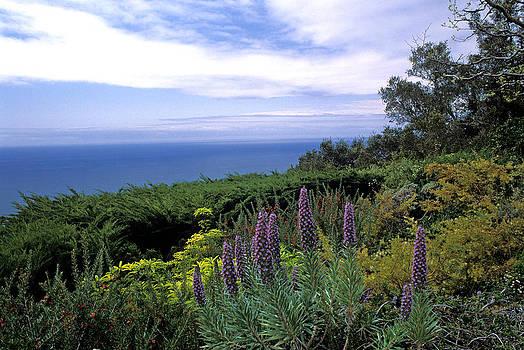 Kathy Yates - View from Ventana Big Sur
