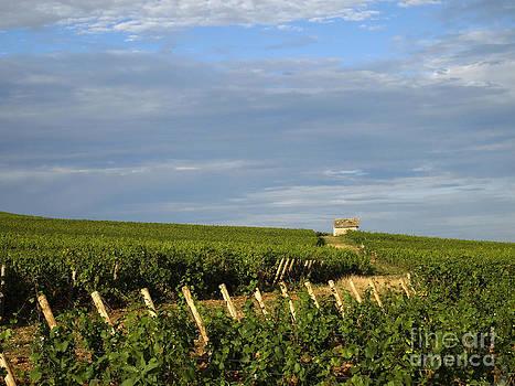 BERNARD JAUBERT - Vines in Burgundy. France