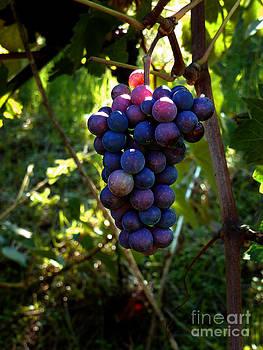 Xueling Zou - Vineyard 31