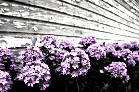 Tamyra Ayles - Vintage Flowers