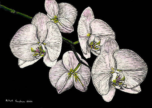 Wade's Orchids by Robert Goudreau