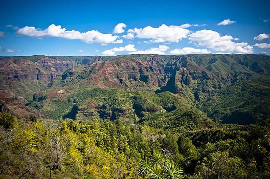 Waimea Canyon Greenery by Jen Morrison